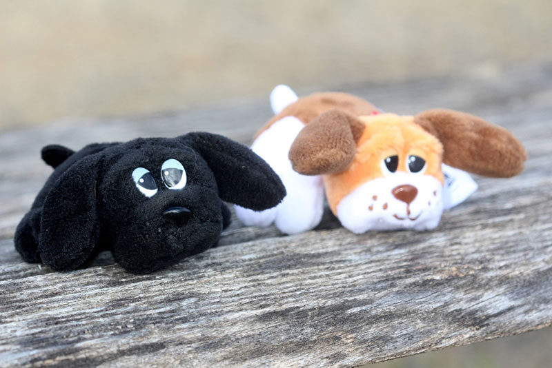 World's Smallest Pound Puppies